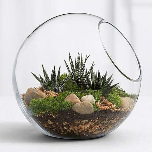 Open Bowl Glass Planter 27cm